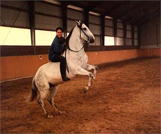 Ritterpferd von Burg Satzwey 1996