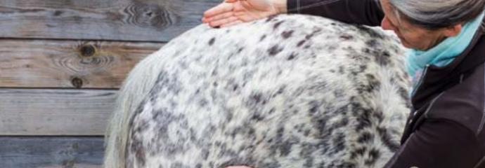 EMRT® – Bowen für  Pferde: Faszien und neuromuskuläre Impulse