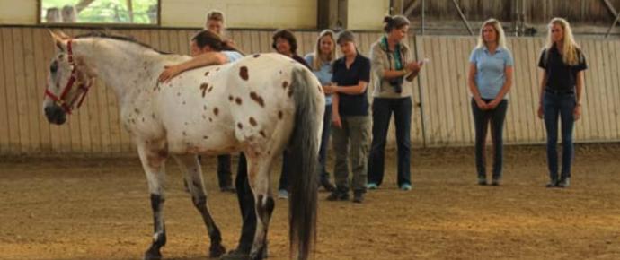 HJN-Rückenschule für Pferde