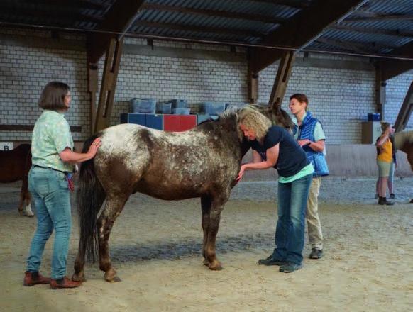 ARS-Schwingungstherapie nach Anna Renata Schulz / Penzel-Akademie